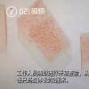 上海海关查获406只活体蚂蚁 蚂蚁体长约2厘米